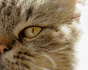 beautiful cat's eye