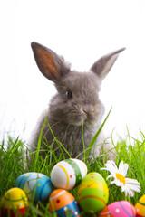 osterhase mit eiern im gras