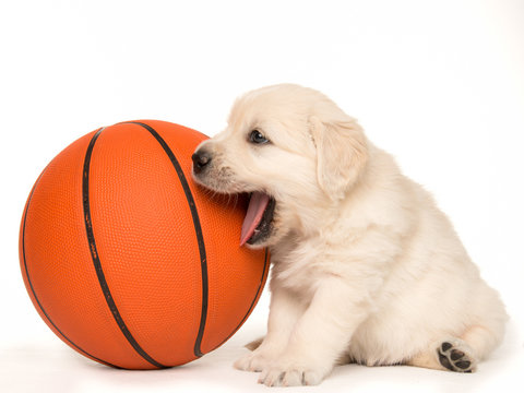 Basketball Puppy