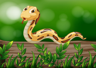 A snake above a wood