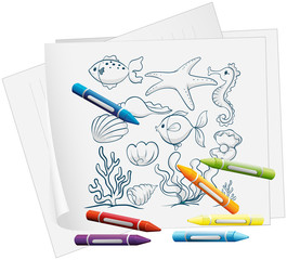 A paper with a drawing of the different sea creatures