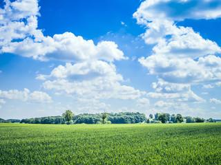 blue sky green meadow