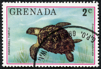 stamp printed in Grenada shows Hawksbill turtle