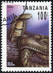 stamp printed in Tanzania shows naja oxiana