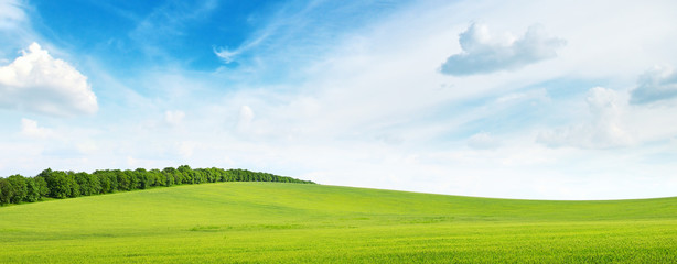 green meadow and blue sky