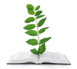 Book with plant isolated on white