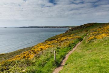 Wall Mural - Pembrokeshire coast path to Newgale St Bride's Bay Wales