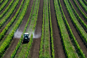 Pestizide sprühen mit Traktor im Weingarten