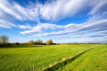 Wall Mural - summer grassland and blue sky