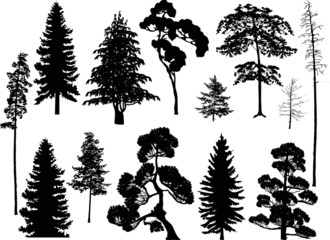 Wall Mural - set of thirteen black trees