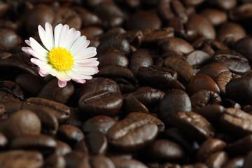 Wall Mural - Blumiger Kaffee