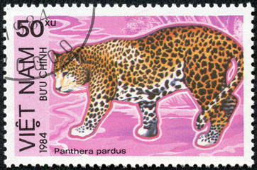 stamp printed in Vietnam shows Panthera pardus or leopard