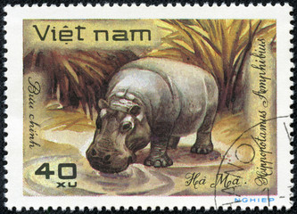 stamp printed in Vietnam shows Hippopotamus