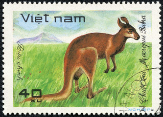 stamp printed by Vietnam, shows kangaroo, wallaby, Australia