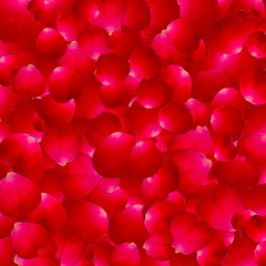 The texture of the petals of roses.Vector