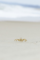 Lonely crab on the beach