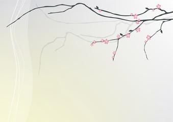 Fototapeta tło z gałązką kwitnącej wiśni obraz