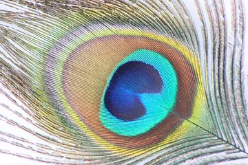 pluma de pavo