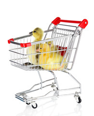 Little ducklings in trolley isolated on white