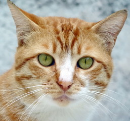 Portrait of young cat