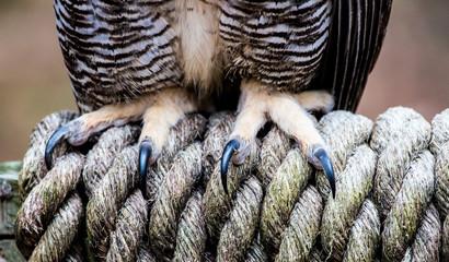 Owl Talons Fotoväggar