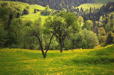 Wiosenne Łąki Pienin