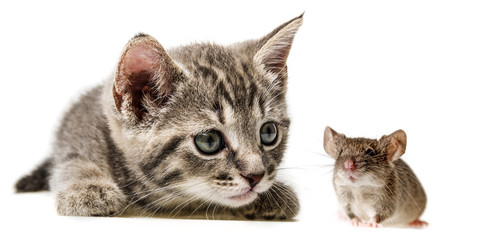 cute little kitten and mouse