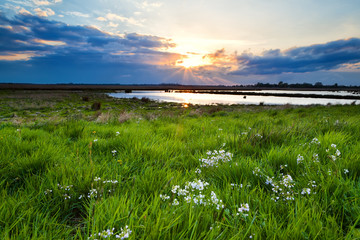 Wall Mural - sunset over flowering  green meadow