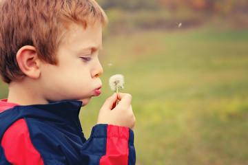 Little boy with a dandelion