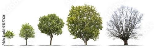 diff rentes tapes de la vie d 39 un arbre sur fond blanc stockfotos und lizenzfreie bilder auf. Black Bedroom Furniture Sets. Home Design Ideas