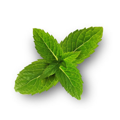 Green mint leaves isolated on a white background.Vector