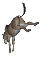 Donkey rearing