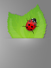 Background with fresh green leaves and ladybird.
