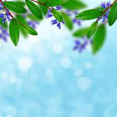 Green leaves and blue flowers