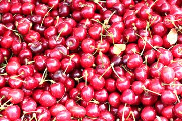 Mazzard cherry