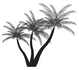 Palm silhouette. Vector illustration. EPS 10.