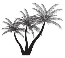 Palm silhouette. Vector illustration. EPS 10.