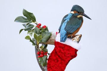 Fotoväggar - Kingfisher, Alcedo atthis, Christmas