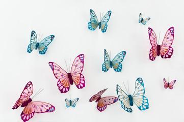 butterfly model