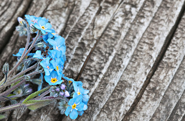 Bunch of beautiful forget me not flower