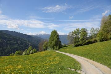 Wall Mural - Wanderweg in der Steiermark