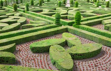 Topiary in the Villandry castle