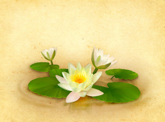 Floral card with beautiful water lily drawing