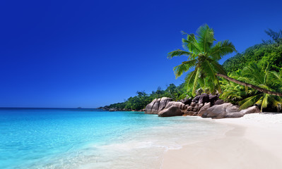 Fototapete - beach at Praslin island, Seychelles
