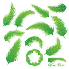 Coconut Leaf  vector set