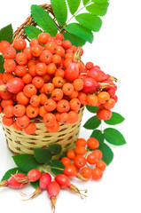 rowan berries and rose hips in a basket close-up