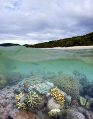 Coral reef near Whitehaven Beach in Whitsundays