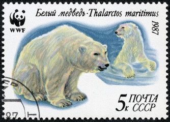 stamp printed by Russia, shows Polar bear, north, ice