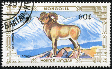 stamp printed by MONGOLIA shows mountain goat