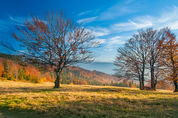 The mountain autumn landscape in Beskidy
